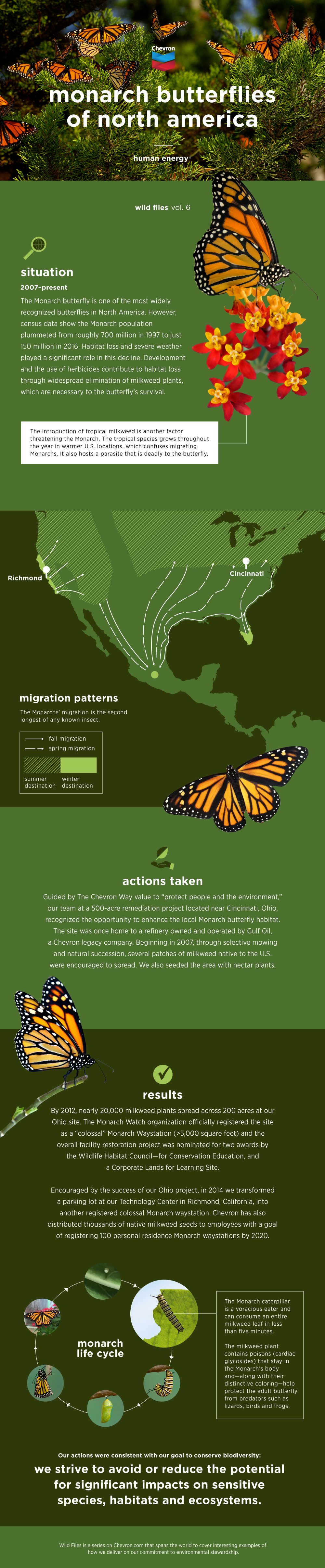 Wild Files: Monarch Butterflies of North America